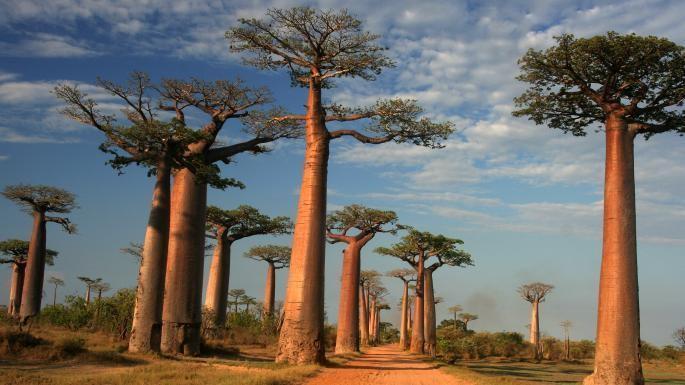 Chuyển phát nhanh đi Madagascar