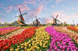 Vận chuyển hàng đi Hà Lan bằng đường biển
